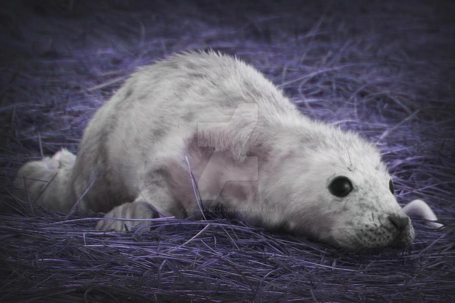 Seal 06 by x-Emma-Billi-x
