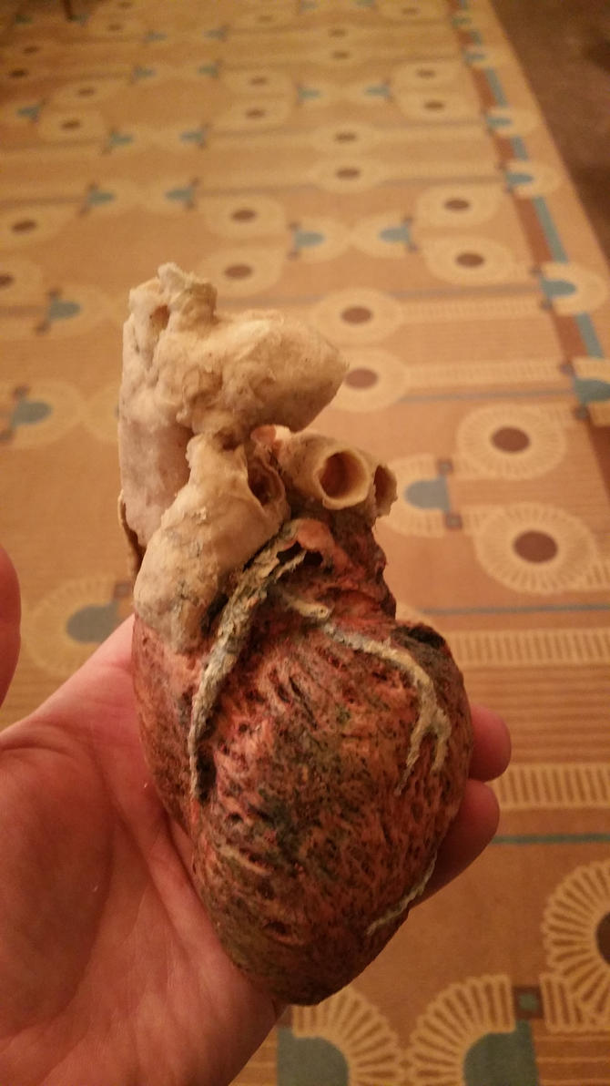 Plasticized Human Heart (Real) by PamplemousseCeil
