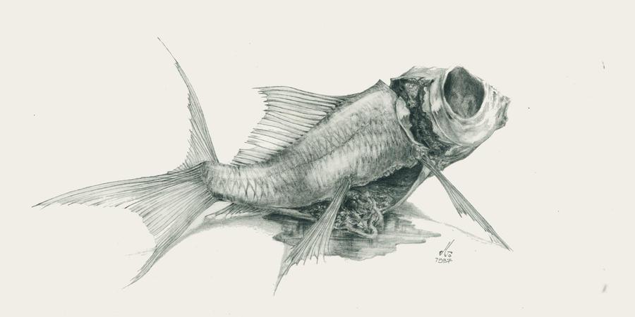 goldfish by Mindac