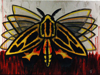 Lepidopteris
