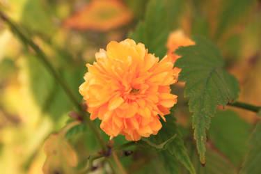Flower XXV by Izi-M