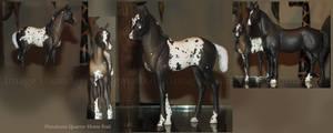 Grulla Pintaloosa QH Foal