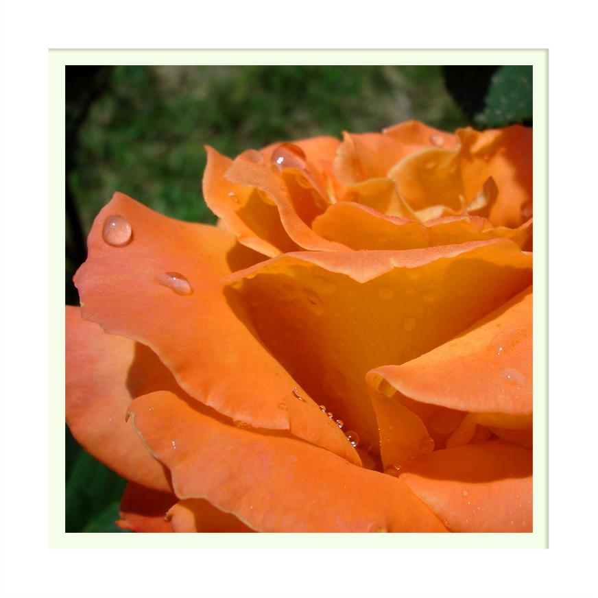 Orange::. by nandiamond