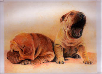 Media Tinta Color - Doggies