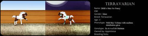DHR's Shez So Fancy as a foal by appieloosa