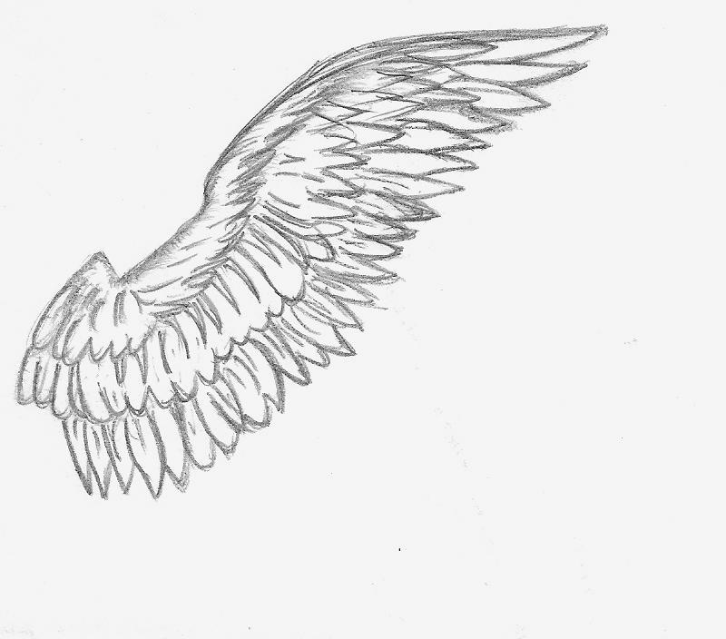 angel wing sketch by elusivellice on deviantart. Black Bedroom Furniture Sets. Home Design Ideas