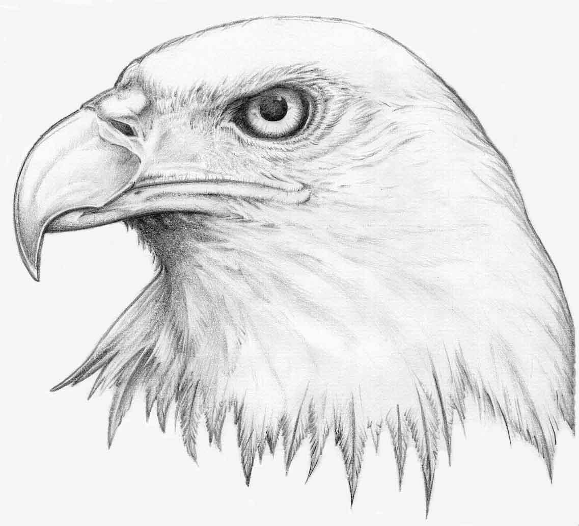 Easy Eagle Head Drawings Viewing Gallery