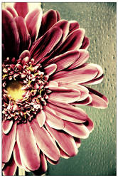 Acid Flower by clasixart