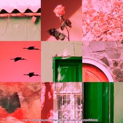 OO4 ~ carnation.psd by gabibimbap