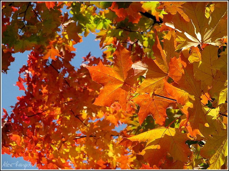 Autumn is over us. by Noiriel