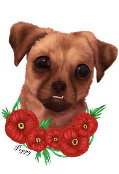 Poppy Portrait