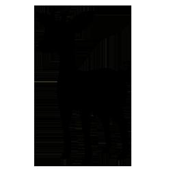 040Silhouette by Ferrari94