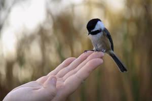 Where are my seeds by Stirk-Bostaurus