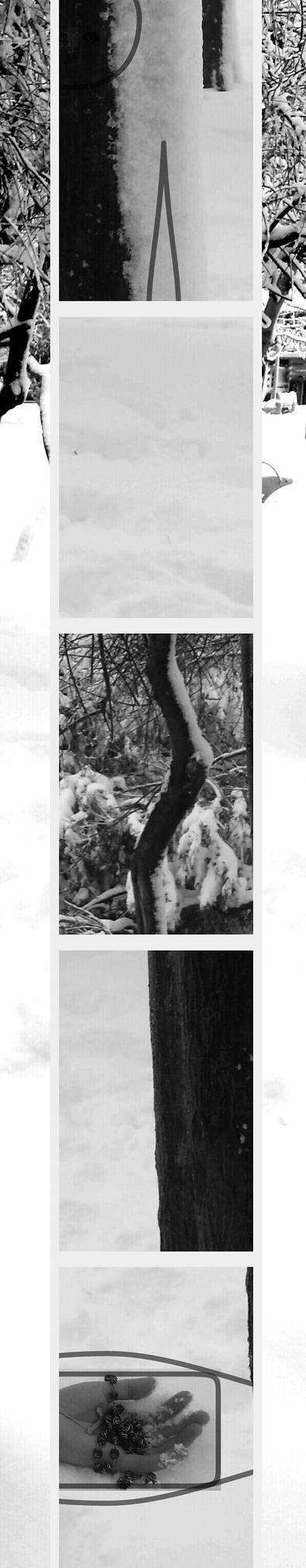 Forest vivisection C2 by june35DA