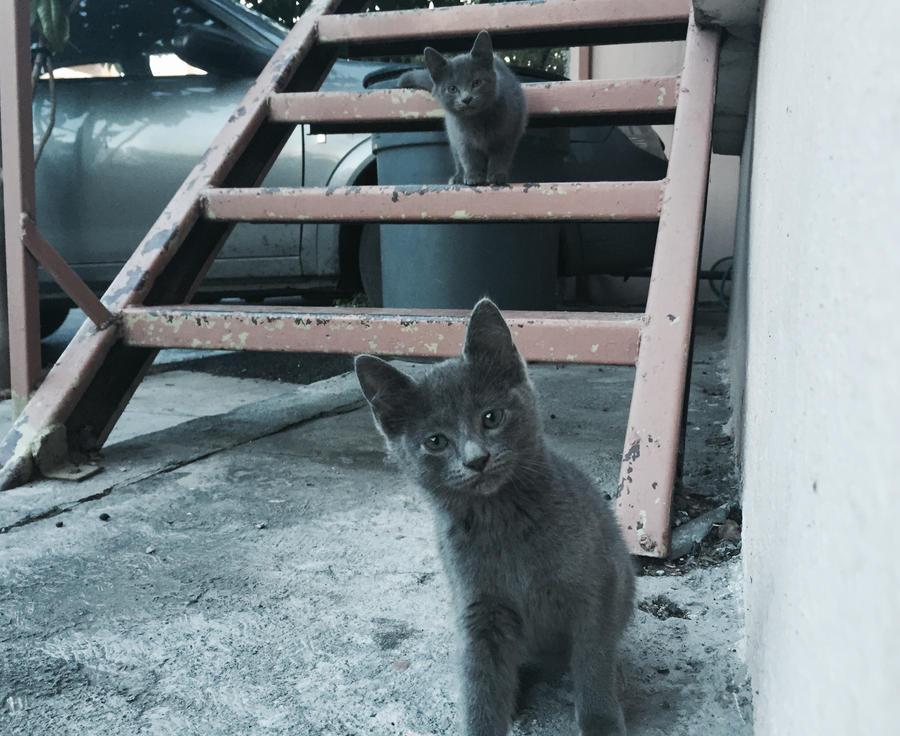 baby cats by tothemo0nandback