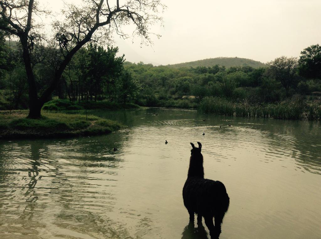 llama viendo el paisaje by tothemo0nandback