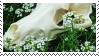 F2U Border Collie Skull Stamp 1 by Rattteeth