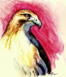 Hawk Watercolor by ValliantCreations