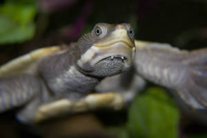 Turtle Face by shaybo88