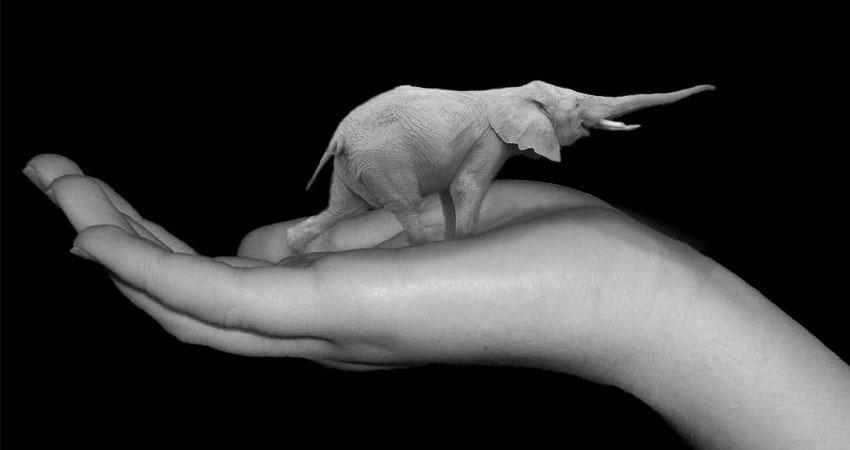 Littlephant by barkingaardvark