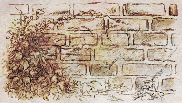 Ivy and brick sketch