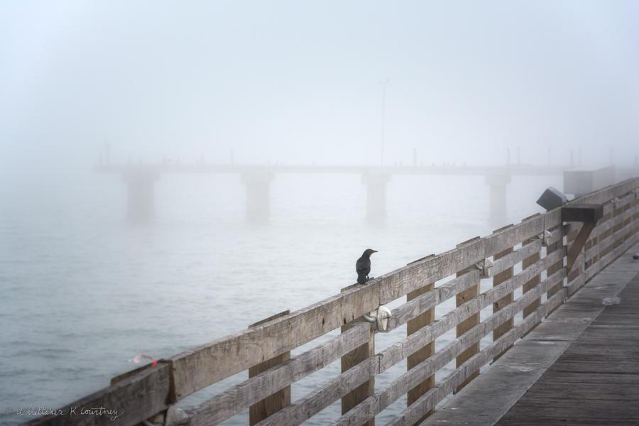 Galveston fishing pier in heavy fog by whitt107 on deviantart for Galveston fishing pier