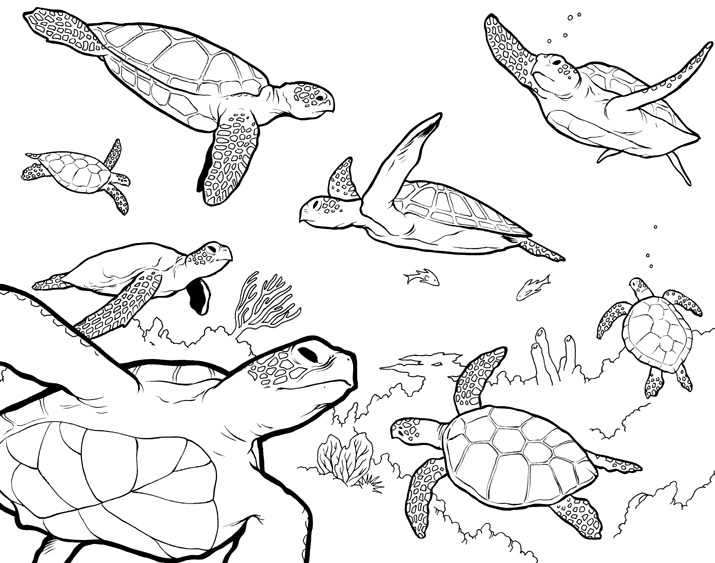 Sea turtles by colbybluth on deviantart for Sea turtle coloring page