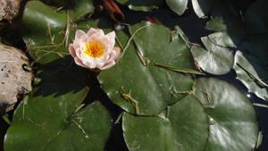 Flower stock 3
