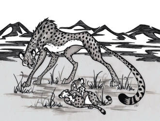 Cheetahs by AnotherWinter
