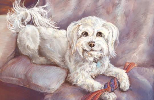 Leo: the sassiest doggo