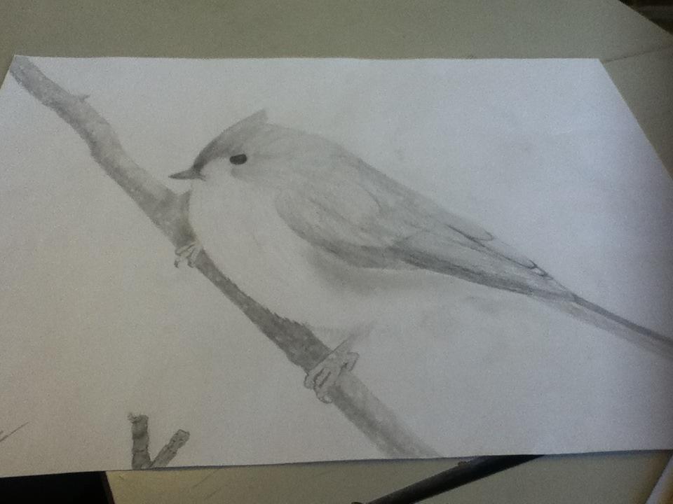 Birdy... by SallyMarshmallow