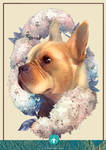 Pet of the Month - Frenchie