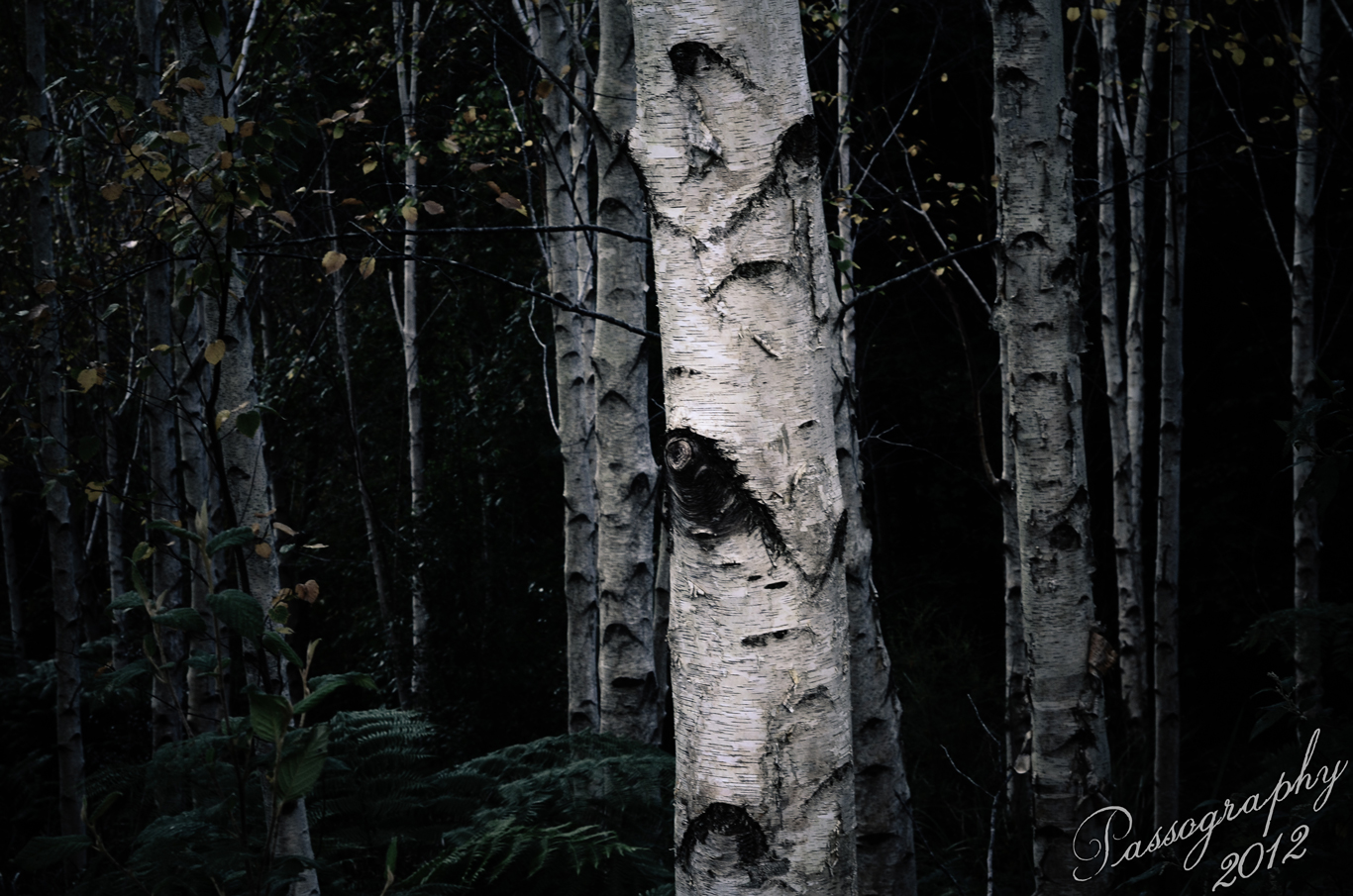 dark places forest trees - photo #21