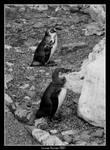 Parallel Penguins