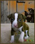 Meet Marley