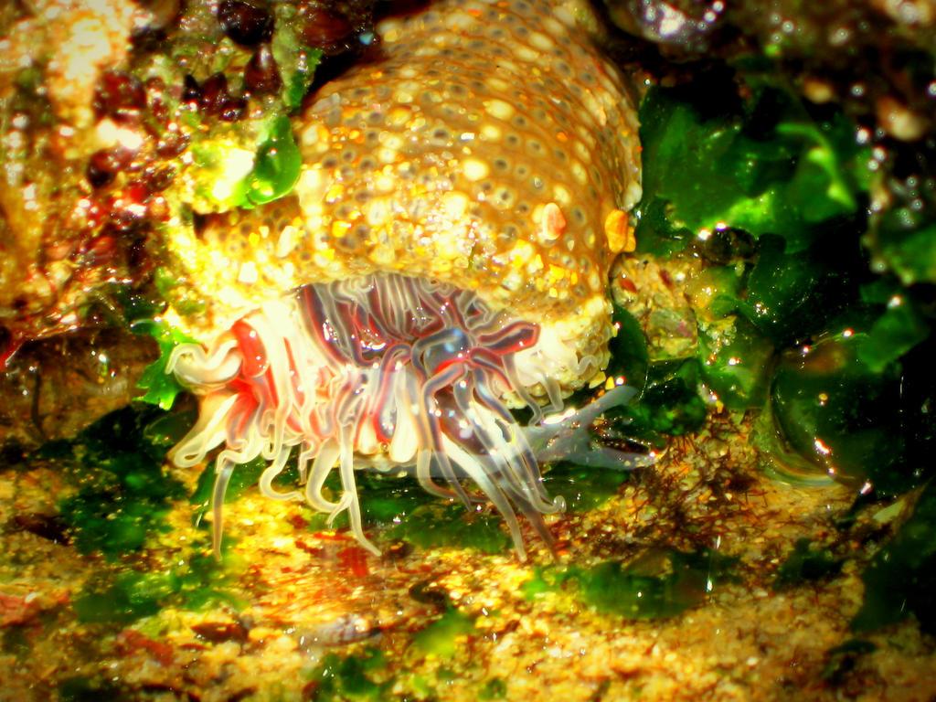 Sea anemone! by ZoevanRumt on DeviantArt