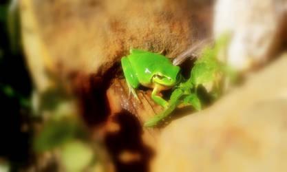 Green tree frog! by ZoevanRumt