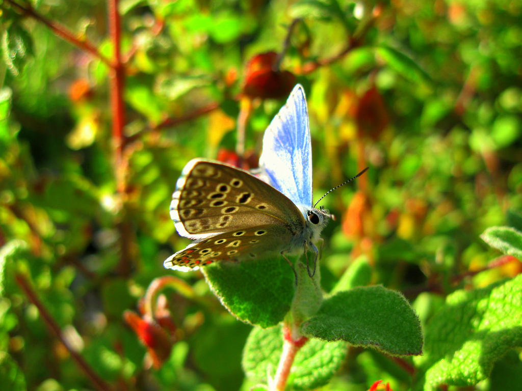 Blue butterfly! by ZoevanRumt