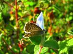 Blue butterfly!