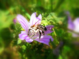 Pollen dream! by ZoevanRumt