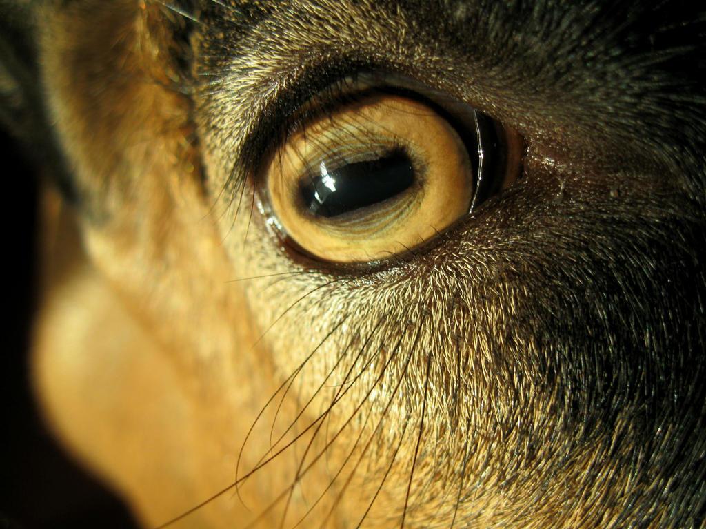 Giovanni's eye! by ZoevanRumt