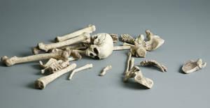 Bones - 3