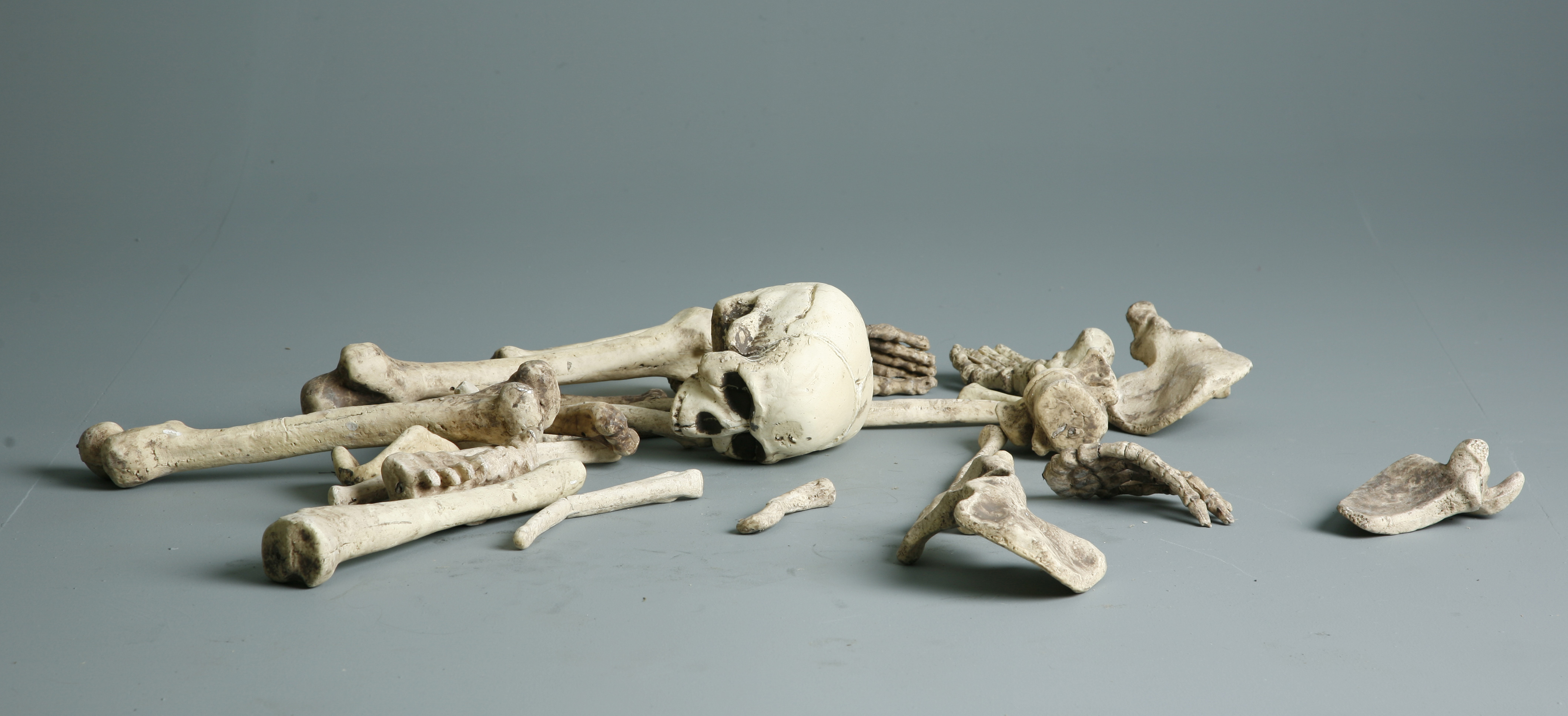 Bones - 4