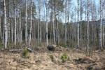 Norwegian Wood - 1