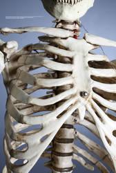 Skeletal - 4 by mjranum-stock