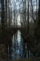 Mystic Woods by mjranum-stock