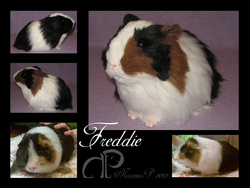 Custom Guinea Pig Plushie - Freddie by Morumoto
