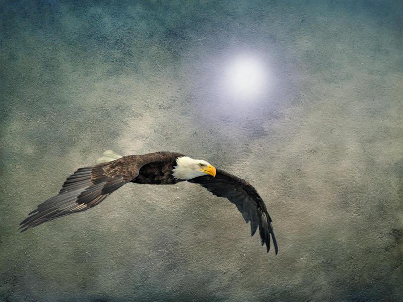 Bald Eagle Textured Art by DavidDehner