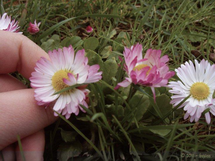 Blossom - Boglarka by bejuss