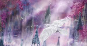Flight of the Silverbird